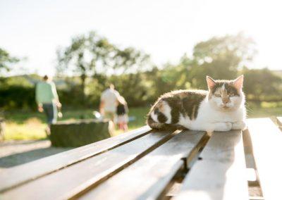The campsite cat